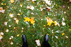 Yellow autumn leaves lie on the green grass. stock images