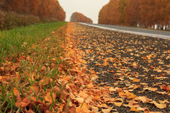 Yellow autumn leaves. Lying along the road Stock Images