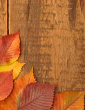 Yellow autumn leaves on old wood Stock Images