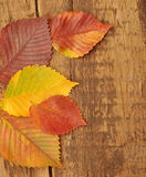 Yellow autumn leaves on old wood  background Stock Image