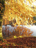 Yellow autumn leaves over lake Royalty Free Stock Images