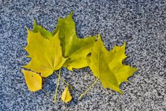 Yellow autumn leaves on the parapet of the pavement. Yellow autumn leaves on the granite parapet of the pavement stock photography