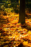 Yellow autumn leaves in park Stock Photos