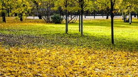 Yellow autumn leaves in park stock photography