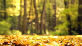 Yellow autumn leaves in the park.Yellow autumn maple leaves in the forest.Autumn landscape in the park, the woods. stock video