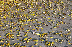 Yellow autumn leaves on the pavement Stock Photography