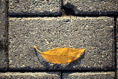 Yellow autumn leaves on the pavement Royalty Free Stock Images