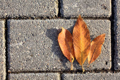Yellow autumn leaves on the pavement Stock Images