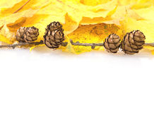 Yellow autumn leaves and pine cones frame Stock Image