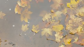 Yellow autumn leaves in puddle stock footage