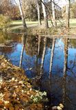 Yellow autumn leaves and reflection of trees in water. Stock Image