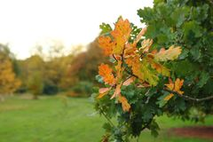 Yellow autumn leaves in shallow focus.  royalty free stock images