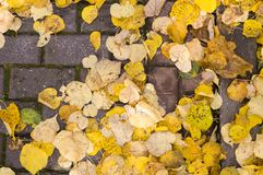 Yellow autumn leaves on the sidewalk tiles. background. Yellow autumn leaves on the sidewalk tiles. background, nature stock photos