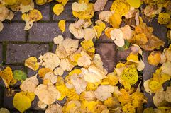 Yellow autumn leaves on the sidewalk tiles with vignette. background. Yellow autumn leaves on the sidewalk tiles with vignette. background, nature royalty free stock images