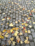 Yellow autumn leaves on stone pavement. Autumn leaves on the path in city park Stock Images