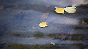 Yellow autumn leaves at surface of pond stock video footage