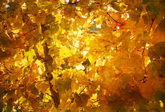 Yellow Autumn Leaves Wallpaper Stock Photo
