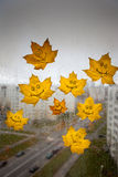 Yellow autumn leaves on a  window Royalty Free Stock Images