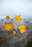 Yellow autumn leaves on a  window Stock Photography