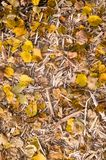 Yellow autumn leaves on the wood chips. background. Yellow autumn leaves on the wood chips. background, nature stock photos
