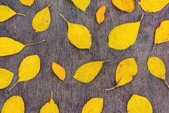 Yellow autumn leaves on wooden background. Yellow autumn leaves on a wooden background royalty free stock image