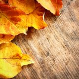 Yellow autumn leaves on wood Royalty Free Stock Photos