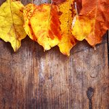 Yellow autumn leaves on wood Stock Photography