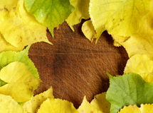 Yellow autumn leaves Royalty Free Stock Photo