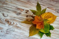 Yellow autumn leaves on wooden boards stock photos