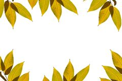 Yellow autumn leaves. royalty free stock photography