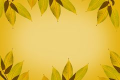 Yellow autumn leaves. royalty free stock image