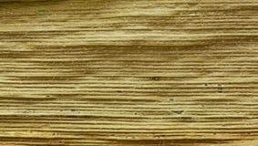 Yellow autumn maize leaf background Stock Photo