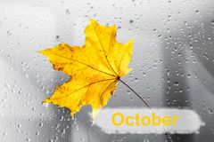 Yellow autumn maple leaf on a rainy window. The concept of Fall seasons. Yellow autumn maple leaf on a rainy window. The concept of Fall seasons royalty free stock photo