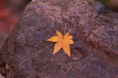 Yellow autumn maple leaf on stone pavement Stock Photo