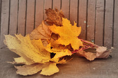 Yellow autumn maple leaves lying on bench Royalty Free Stock Images