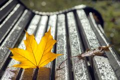 Yellow autumn maple leaves lying on a wooden bench in the park a royalty free stock photography