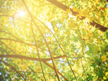 Yellow autumn natural background Stock Photography