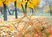 Yellow autumn park Stock Photos