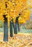 Yellow autumn park Stock Image