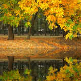 Yellow autumn in the park flooding in water. Quiet yellow autumn in the city park flooding in calm water Royalty Free Stock Photo
