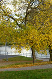 Yellow autumn in a park Royalty Free Stock Photography