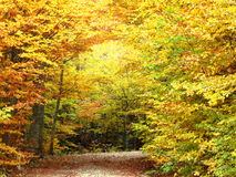 Yellow autumn road in forest Stock Photos