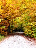 Yellow autumn road in forest Stock Images