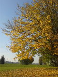 Yellow autumn Royalty Free Stock Image