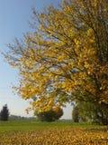 Yellow autumn royalty free stock image