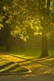 Yellow autumn Sunrise in Topcider park, Belgrade Stock Image