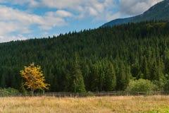 Yellow autumn tree Stock Photo