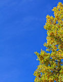 Yellow autumn tree and blue sky frame background Stock Photo