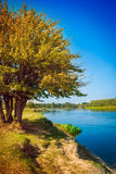 Yellow autumn tree on coast of river Instagram Stock Photo