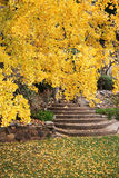 Yellow Autumn tree Royalty Free Stock Images